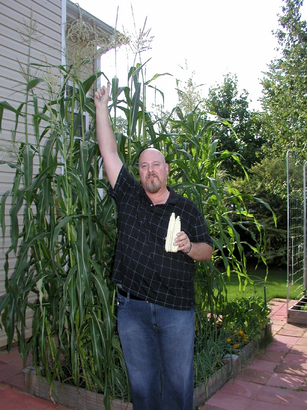Corn_shown_in_scale