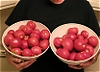 16_Lbs_of_Home_Grown_Tomatoes_no_head.jpg