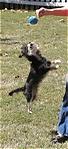 Buddy_Jumping.jpg
