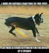 Dick_Dog.jpg