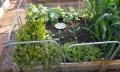 Lettuce_cabbage_cucumbers.jpg