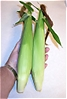 Twin_Ears_of_White_Corn.jpg